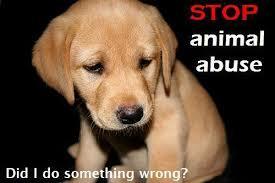 Stopp dyremishandling